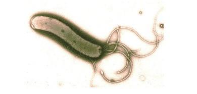 helicobacter01